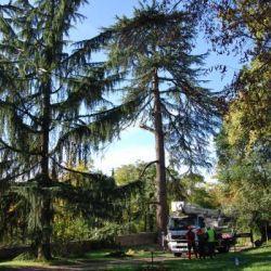 Organizzazione del cantiere -abbattimento Cedrus deodara Salò