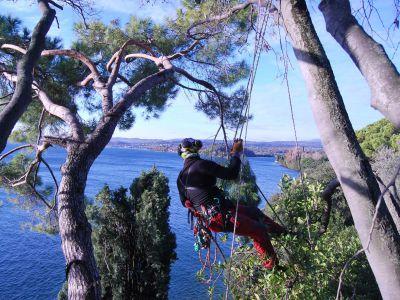 Potatura alberi in tree climbing lago di Garda
