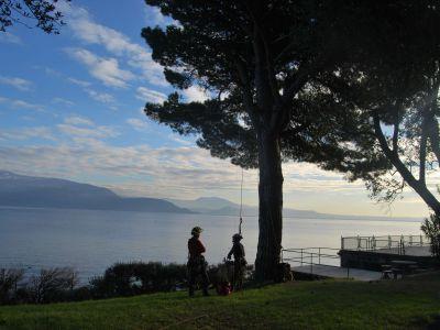 Potatura Pino domestico Lago di Garda