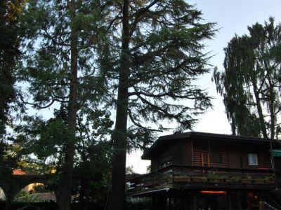 Potatura alberi secolari