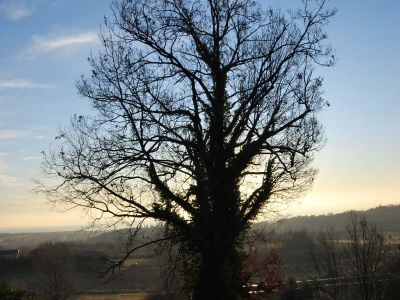 Potatura in tree climbing quercia prima